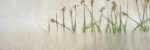 bulrush-12x36-jill-van-sickle